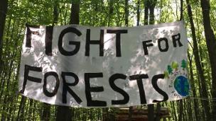 Bild Wälder